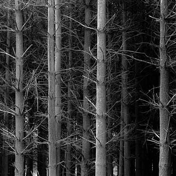 Standing Pines 001 by Noah Weiner