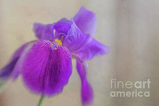 Standing Tall and Proud Purple Iris by Nikki Vig