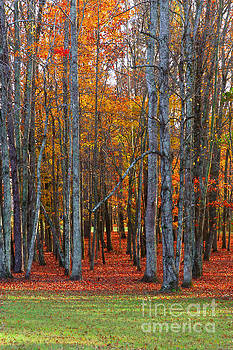 Standing Tall on the Natchez Trace by T Lowry Wilson
