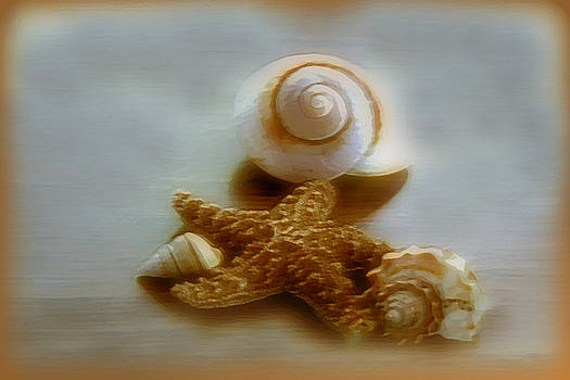 Linda Sannuti - Star and Shells