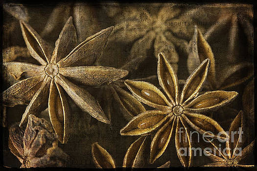 Star Anise by Cindi Ressler