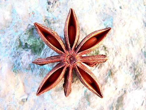 Star Anise by Darren Kearney