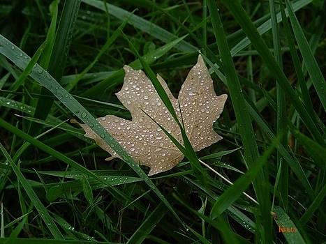 Alana  Schmitt - Star Leaf