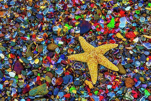 Starfish Among Sea Glass by Garry Gay