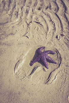 Starfish  by Danielle Silveira