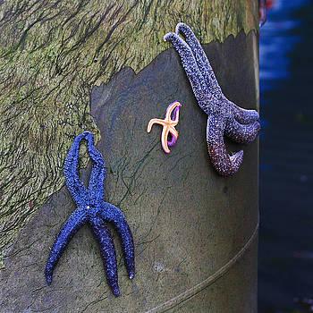 Art Block Collections - Starfish Gathering