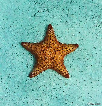 Starfish by J Morgan Massey