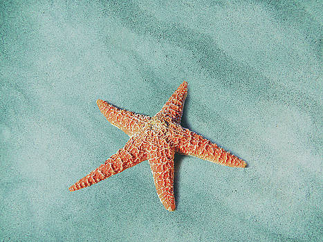 Starfish by Jacky Gerritsen