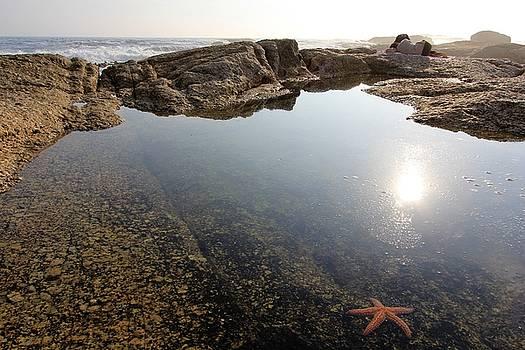Starfish by Jennifer Ansier