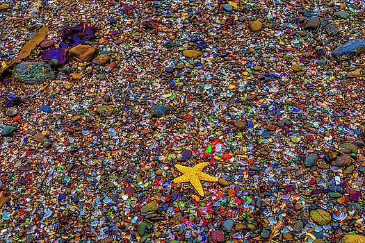 Starfish On Glass Beach by Garry Gay