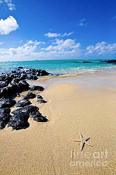 Starfish on Ile aux Cerfs Island in Mauritius by Christy Woodrow