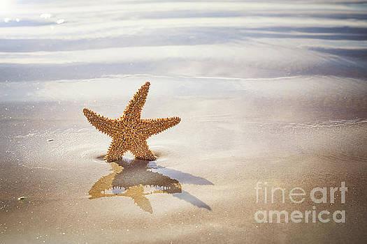 Starfish on the beach by Jane Rix