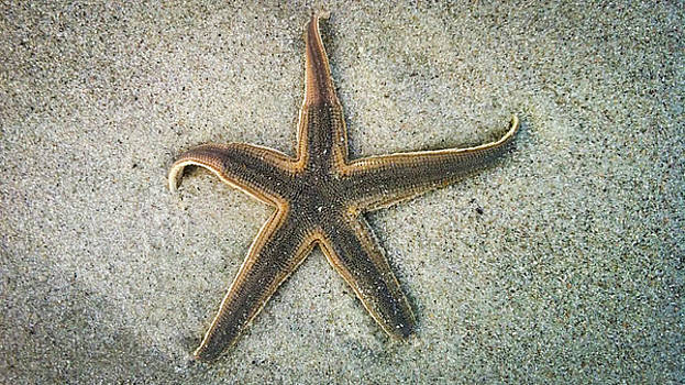 Starfish on the Beach by Michael Stothard
