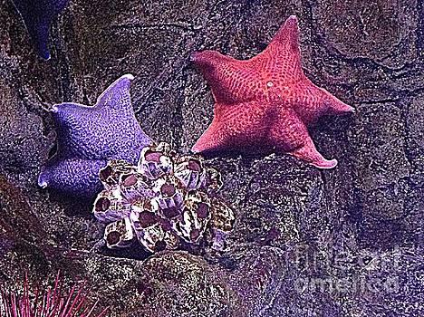 Starfish Pink Starfish Blue by Richard W Linford