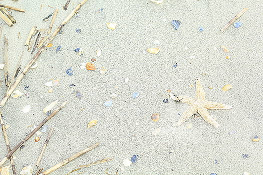 Starfish.... by Tammy Schneider