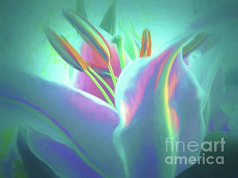 Stargazer-Floral Abstract by Scott Cameron