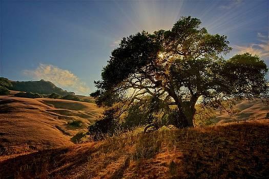 Starlight, California Oak by Flying Z Photography by Zayne Diamond