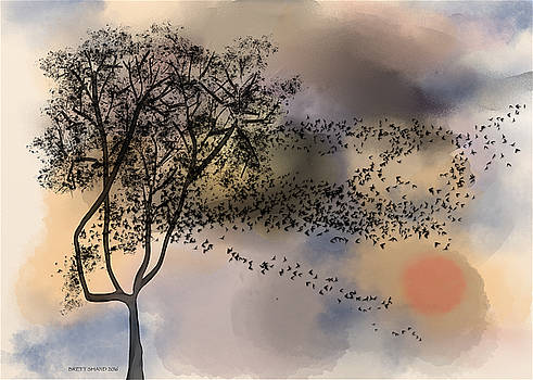 Starlings at Dusk by Brett Shand