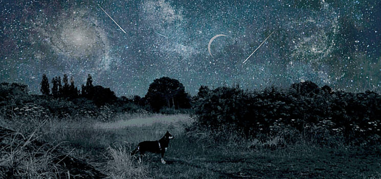 Starry Night Sky In Cheshire England And A German Shepard Dog by Suzanne Powers