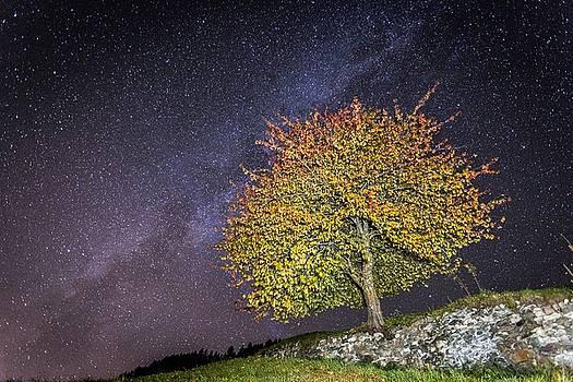 Francesco Riccardo  Iacomino - Stars and tree