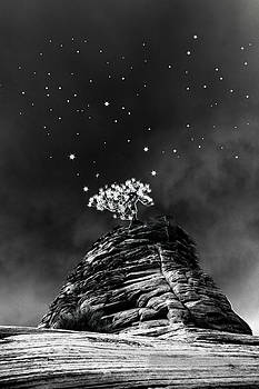 Stars At Night by Jim Cook