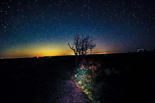 Enchanted Nights by JK Davis