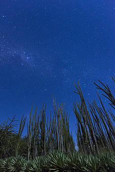 Stars over Cactus by Matt Cohen