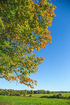 Karol Livote - Start Of Autumn