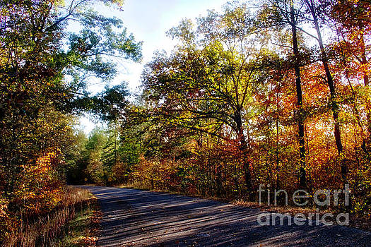 State Road 3388 in Autumn Morning Light, Sumter National Forest by Gregory Schultz