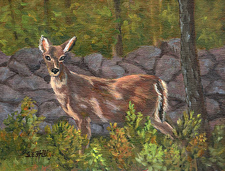 Stately Doe by Sharon E Allen
