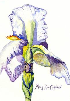 Stately Iris  by Mary Sue Copeland