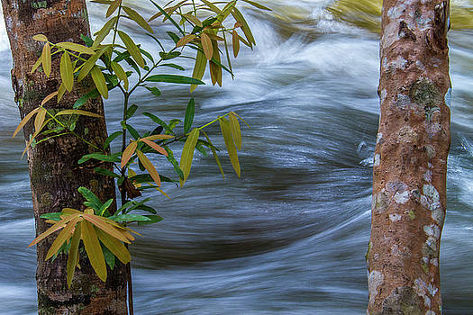 Steady and Flowing by Hitendra SINKAR