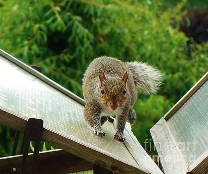 Stealthy Squirrel by C Lythgo