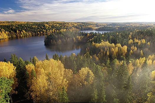 Steamy Forest by Teemu Tretjakov