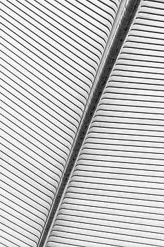 Steel roof structure of liege guillemins railway station by Maximilian Wollrab