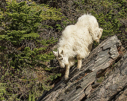 Steep Downhill Slope by Lois Lake