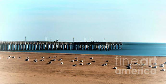 SteepleChase Pier by Arnie Goldstein