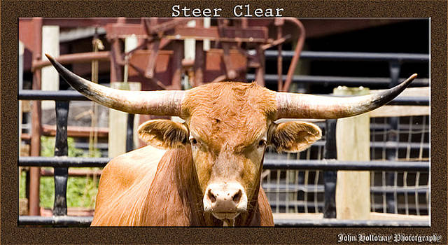 Steer Clear by John Holloway