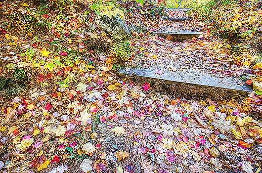 Step Into Fall by David Pratt