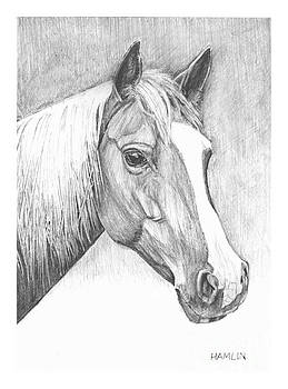 Stephanies Horse by Steve Hamlin