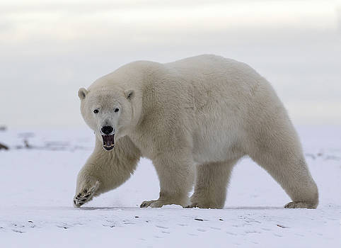 Stepping Out in the Arctic by Cheryl Strahl