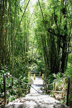 Steps in El Yunque by The Art of Alice Terrill