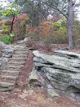Steps in the woods by Aaron Martens