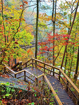 Steps To the Gorge by Susan Leggett