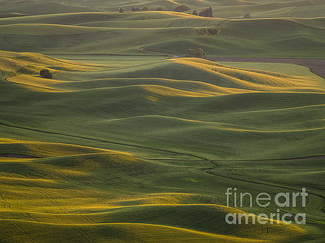 Steptoe Butte 2 by Tracy Knauer