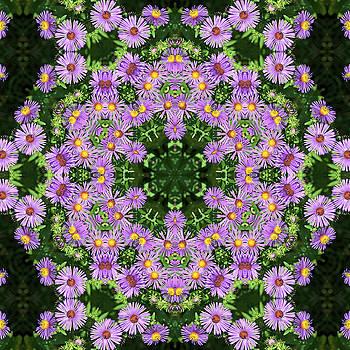 Asters Kaleidoscope by Valerie Kirkwood