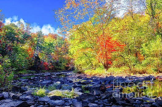 Stevens Creek near Plum Branch, South Carolina, #5 by Gregory Schultz