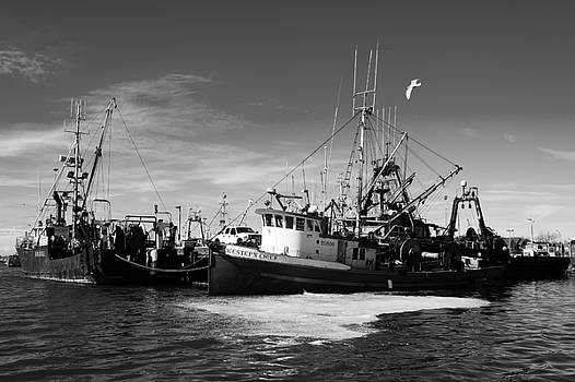 Steveston Fishboats 1 by Colin Sands