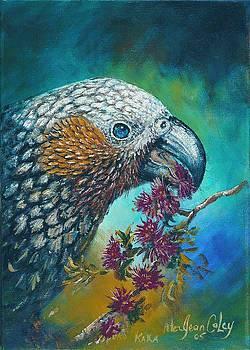 Stewart Island Kaka by Peter Jean Caley