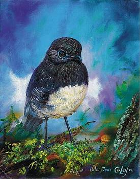Sth Island Robin by Peter Jean Caley